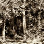 """JGS_WoodcutForest"" by PhotographyofGrace"