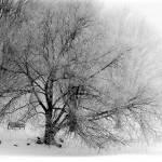 """Waterfront_WinterPark4"" by PhotographyofGrace"
