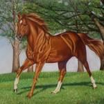 """""""Secretariat"""" by gsauder"""