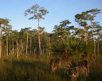 Big Cypress Dawn 3