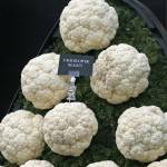 """Display of cauliflower beauty"" by rhallam"