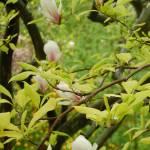"""""""Blossom Series 1A"""" by najube"""