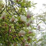 """Blossom Series 1C"" by najube"