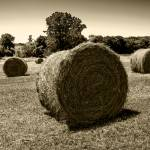 """Hay Rolls in a Kansas field"" by SecondCityImage"