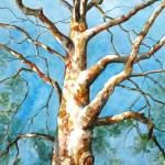 """Sycamore Tree"" by allinghamcarlson"