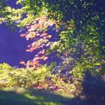 """Autumn Leaves"" by CarmenL"
