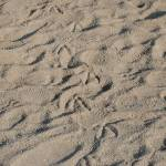 """Sand"" by Candi"