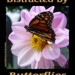 """Distracted by Butterflies 04147 (Black Background)"" by quotes"