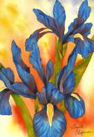 Bold & Beautiful Blue Iris