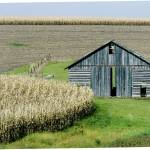 """Midwestern Barn and Cornfield"" by photoworks"