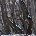 """platan trees"" by VivianGerogianni"