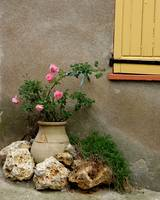 Pink Roses in Clay Pot