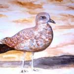 """Seagull"" by Blarney333"