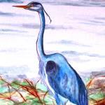 """Blue Heron"" by Blarney333"