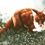 """RED FOX HUNTING"" by AnimalsbyDiDi"