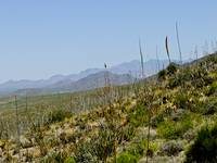 Franklin Mountains looking north