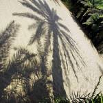 """shadow of a palm tree"" by VivianGerogianni"