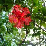 """""""Fiji Red"""" by ProjectBula"""