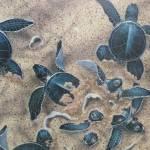 """Turtles"" by ProjectBula"