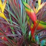 """Bird of Paradise Flower Arrangement"" by ProjectBula"