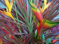 Bird of Paradise Flower Arrangement