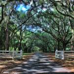 """Wormsloe Plantation"" by MikeDimages"