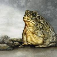 Mr. Woodhouse Toad Art Prints & Posters by Nan Wright