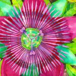 """Passion Flower"" by laurenmcmullen"