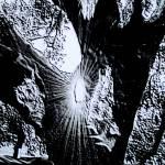 """""""Spirit Tree"""" by Silverwolf"""