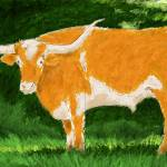 """Longhorn in Shade"" by andykalns"