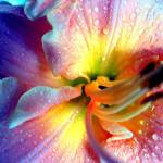 """Technicolor Lily"" by mrsmade"
