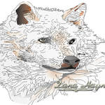 """White Wolf"" by DanaHaynes"