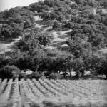 """Napa Valley Dream #2"" by billoneil"