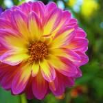 """starburst"" by keithwick"