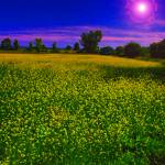 """Field of Goldenrod"" by LarryJReynolds"
