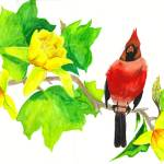 """Redbird In Tulip Tree"" by primalaspects"
