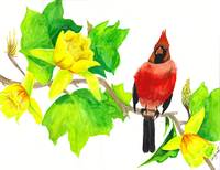 Redbird In Tulip Tree