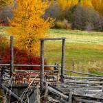 """""""Autumn Corral ... IMG_8965"""" by garytrentPHOTOGRAPHYcdn"""