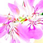 """""""Flowers of Joy"""" by cupoftea"""