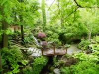 Silence in the Japanese garden