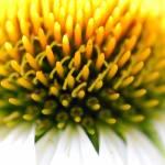 """""""yellow"""" by kymberlyJ"""