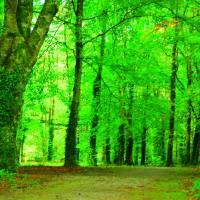 green path Art Prints & Posters by Kymberly Janisch
