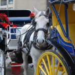 """Horse & Carriage"" by thegoodlife711"