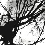 """""""Silhouette"""" by amberhlynn"""