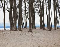 stand of leafless trees on beach