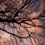 """Tree"