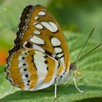 """""""Butterfly2"""" by DPWphotography"""