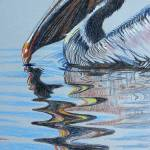 """""To Blue Water"", Pelican"" by foxbrush"