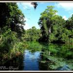 """Weeki Wachee River 3"" by BABowenphotography"