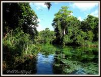 Weeki Wachee River 3